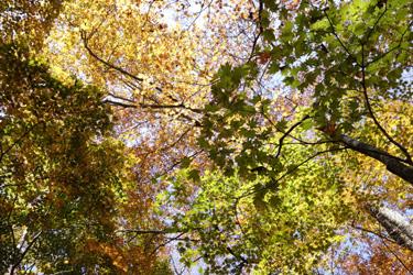 151020_autumn_forest.jpg