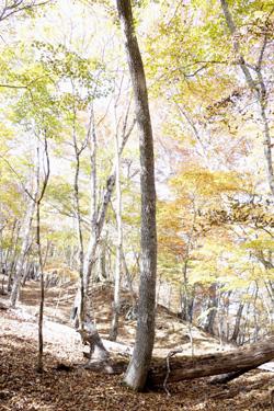 151021_autumn_forest.jpg
