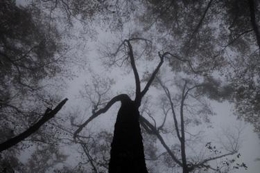 151023_foggy_forest.jpg