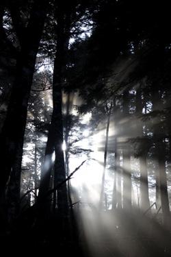 151024_sunlight.jpg