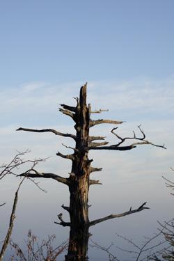 151025_tree.jpg