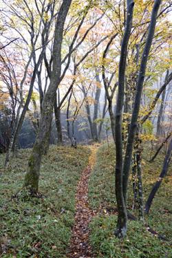 151113_autumn_path.jpg