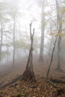 151114_tree_art.jpg