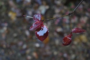 151115_wet_leaves.jpg