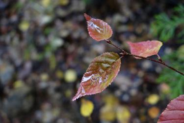 151121_wet_leaves.jpg