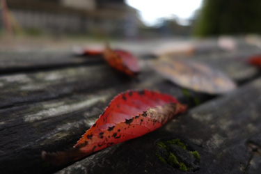151130_autumn_leaves.jpg