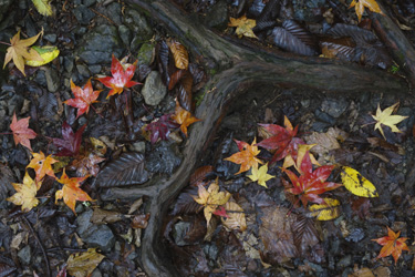 151202_fallen_autumn_leaves.jpg