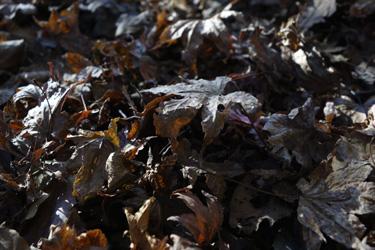 151209_dead_leaves.jpg