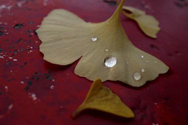 151211_rain_drops.jpg