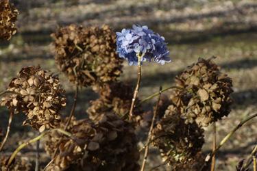 151216_flowers.jpg