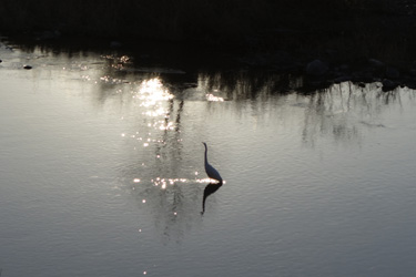 151222_bird.jpg