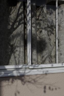 160113_window.jpg