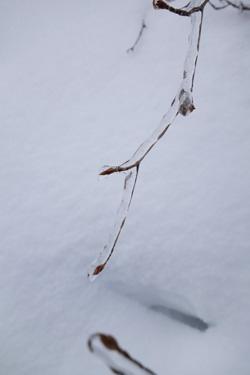 160206_frozen_branch.jpg