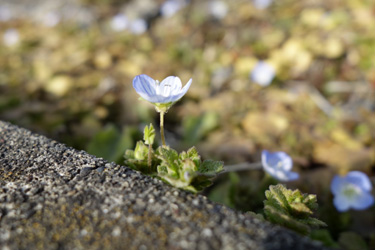 160213_flowers.jpg