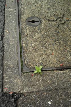 160220_natural_planter.jpg