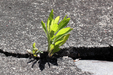 160226_natural_planter.jpg