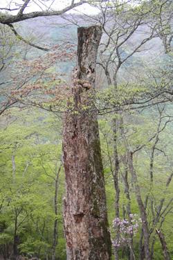 160304_dead_tree.jpg