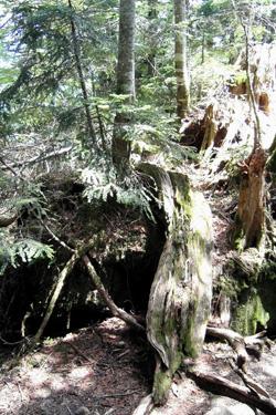 160307_dead_tree.jpg