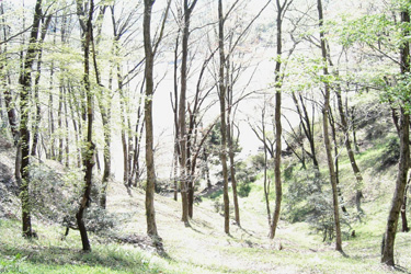 160315_forest.jpg