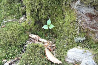 160317_young_leaf.jpg