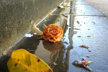 160318_fallen_flower.jpg