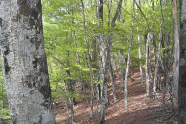 160320_spring_forest.jpg