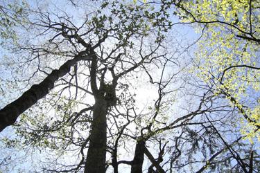 160329_dancing_trees.jpg