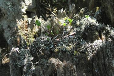 160330_natural_planter.jpg