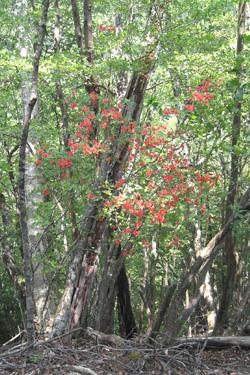 160410_bonsai.jpg