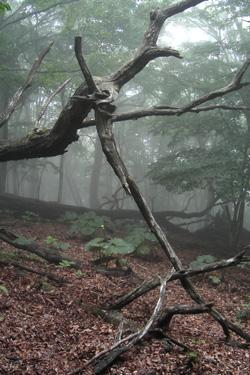 160428_tree_art.jpg