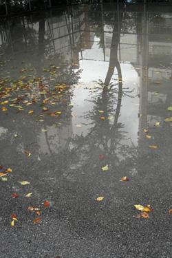 160501_puddle.jpg