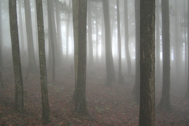 160502_silent_forest.jpg