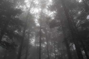 160507_foggy_forest.jpg