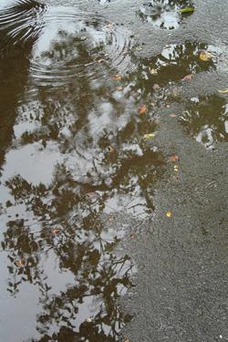 160510_puddle.jpg
