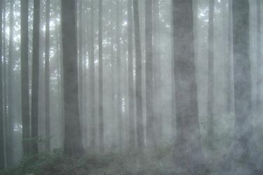 160516_fog.jpg