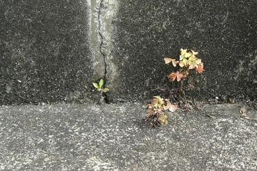 160519_natural_planter.jpg