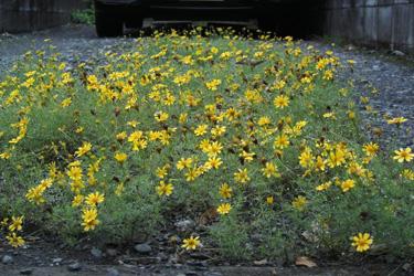 160714_flowers.jpg