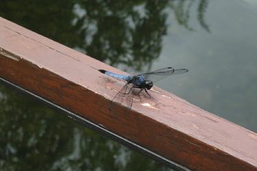 160720_dragonfly.jpg