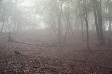 160815_foggy_forest.jpg