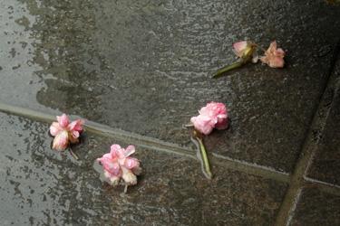 160922_fallen_flowers.jpg