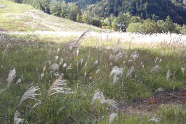 161009_summer_ski_slope.jpg