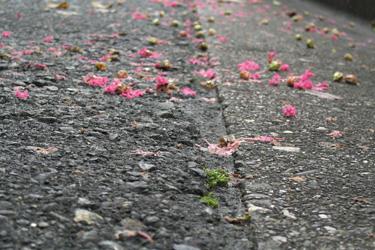 161010_fallen_flowers.jpg