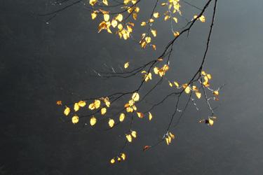 161020_autumn_leaves.jpg