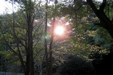 161026_woods.jpg