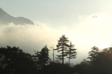 161028_trees.jpg