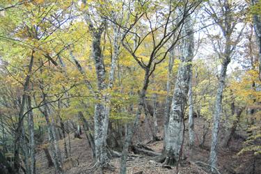 161107_autumn_woods.jpg