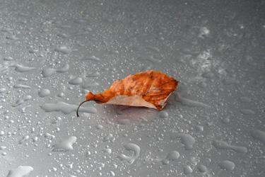 161109_fallen_leaf.jpg