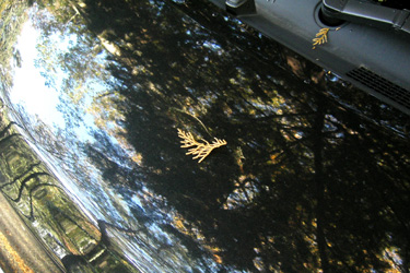 161114_fallen_leaf.jpg