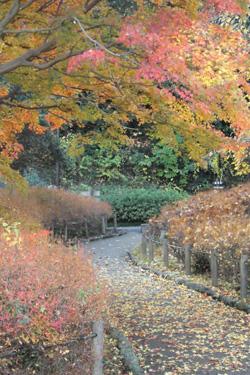 161120_autumn_path.jpg