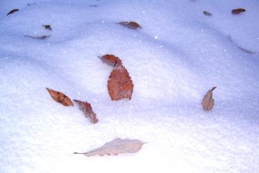 161126_autumn_leaves.jpg